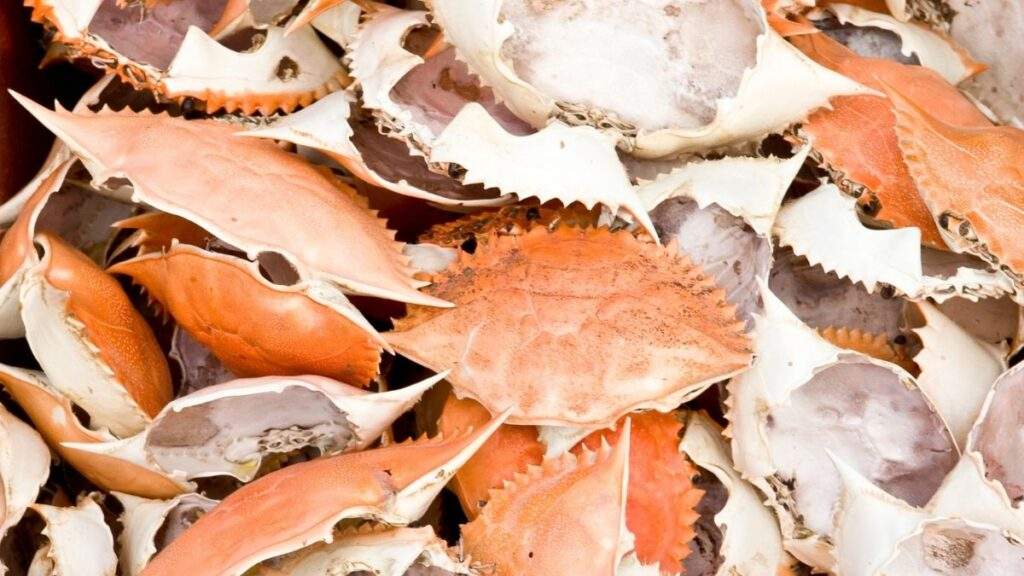 How To Clean Crab Shells For Crafts