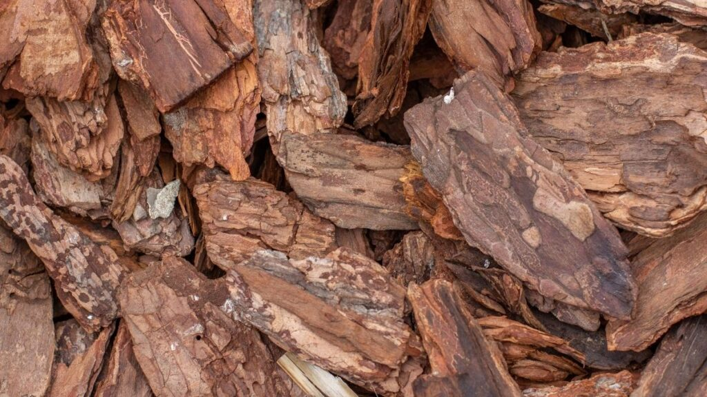 How To Clean Tree Bark For Crafts
